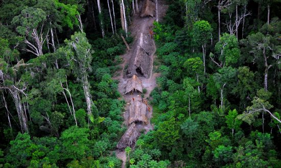 Isolated Tribes Under Threat by Illegal Logging in Brazil