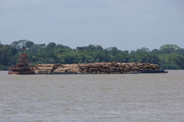 A boat carries wood in Guamá river, within the Amazon forest.