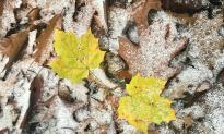 A Berkshire Journal: Segue to Winter