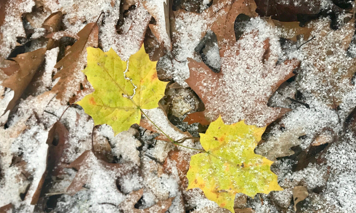 Fall is giving way to winter. (Cardinale Montano)