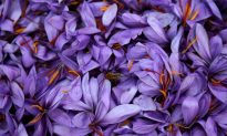 Greece's 'Red Gold': Saffron Trade Blooms in Wilted Economy