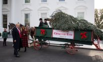 Videos of the Day: President Trump and First Lady Welcome White House Christmas Tree