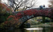 Hikers Avoid Black Friday Lines in Central Park