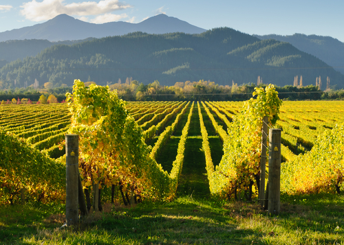 View of the vineyards in the Marlborough district of New Zealand's South Island. (Shutterstock)
