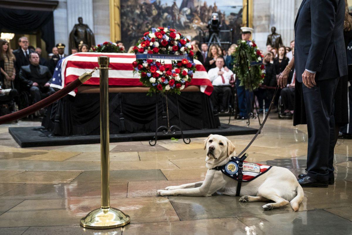 dog next to bush coffin