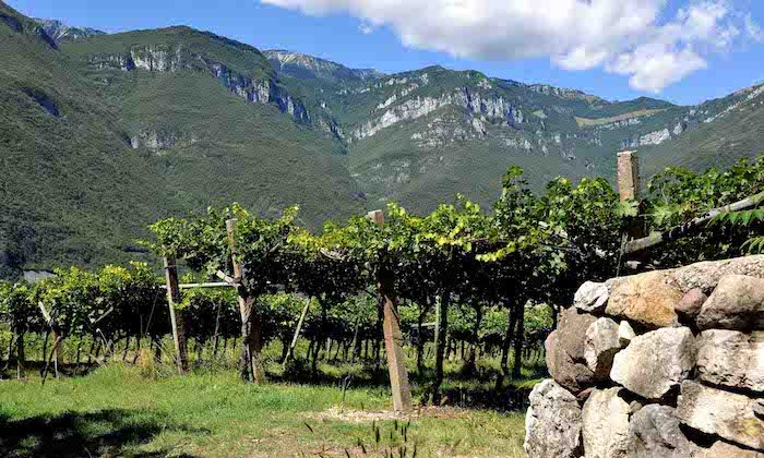 The region includes Trentino, Veneto, and Friuli Venezia Giulia in northeastern Italy. (Courtesy of Delle Venezie)