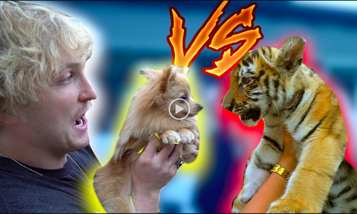 Vlogger Logan Paul holds a dog named Kong and confronts a tiger cub in one of his YouTube videos.(Screenshot/YouTube)