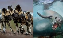 2018 Wildlife Photographer of the Year People's Choice Award Now Open for Voting