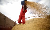 China Makes First Major Buy of US Soybeans Since Trade War Truce