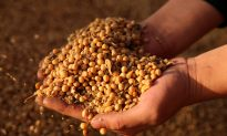 Trump Says China 'Back in the Market' for US Soybeans