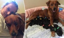 Pregnant Dog Gives Birth to 18 Pups After a Kind Lady Saves Her From Euthanasia