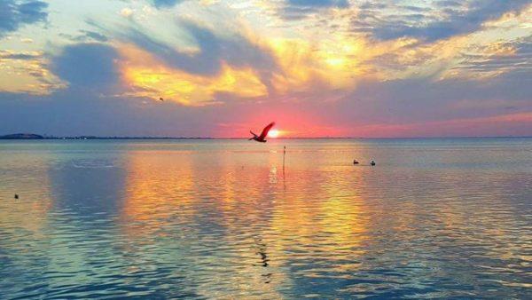 Bird flying over bay at sunset