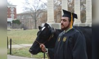Cow Steals Spotlight at Student's Graduation Photo Shoot
