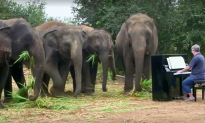 Traumatized Elephants Stop to Listen as Soon as Man Starts Playing for Them