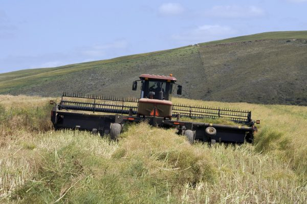 A farmer cuts canola with a harvesting machine in a farm close to Napier, South Africa, in this file photo. (Rodger Bosch/AFP/Getty Images)