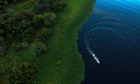 Amazon Destruction Forces Brazil's Cowboys to Ranch Like Texans