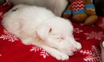 Puppy Found in Bag Filled With Rocks in Frozen Creek