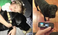 7-year-old diabetic boy's sugar dropped dangerously low, but loyal service dog saved his life