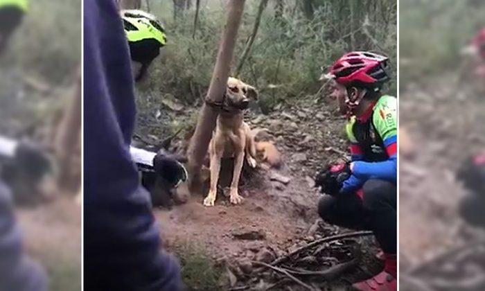 (Facebook Video Screenshot | Asociación Animalista Libera)