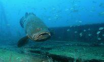 Sea Life and Seashells in Fort Myers and Sanibel Island