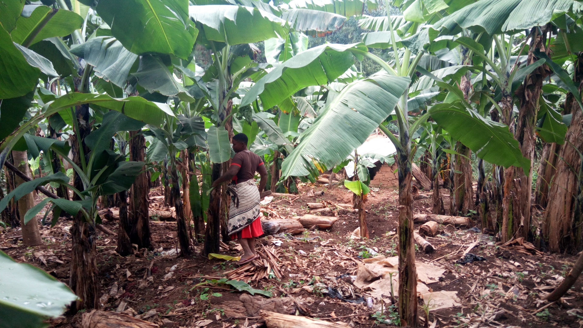 Breaking New Ground in Small-Scale Farming in Uganda