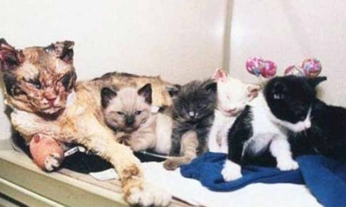 The cat named Scarlett and her five kittens at a veterinary clinic at The North Shore Animal League in Port Washington, New York. (Facebook | Scarlett the cat)