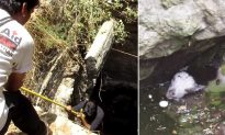 Man lowers into a deep village well to save exhausted baby goat in the nick of time