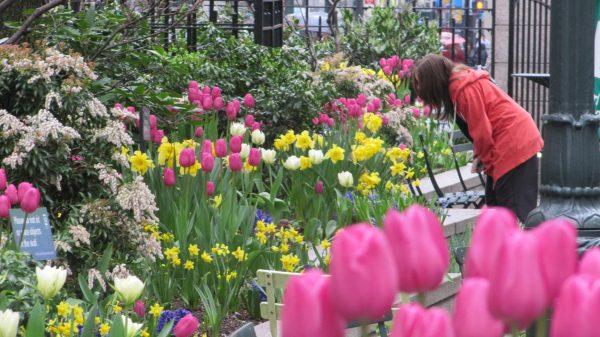 Woman admires flowers
