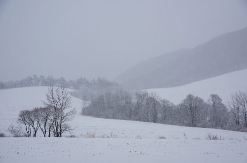 Winter (Shutterstock)