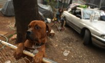 New California Law Bans Retail Sales of Dogs, Cats, Rabbits With One Exception