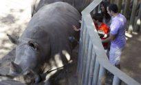 Girl Injured After Falling Into Rhino Exhibit at Florida's Brevard Zoo