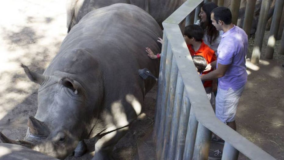 Toddler hurt falling into rhino exhibit at Florida zoo