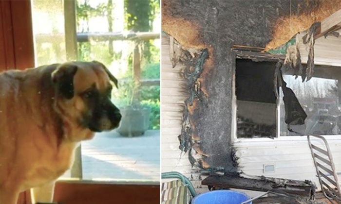 Two months after a tragic house fire, dog finds missing 'family member' under the floorboards