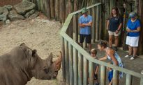 Officials Emphasize That Rhino Who Touched Toddler in Enclosure Won't Be Punished