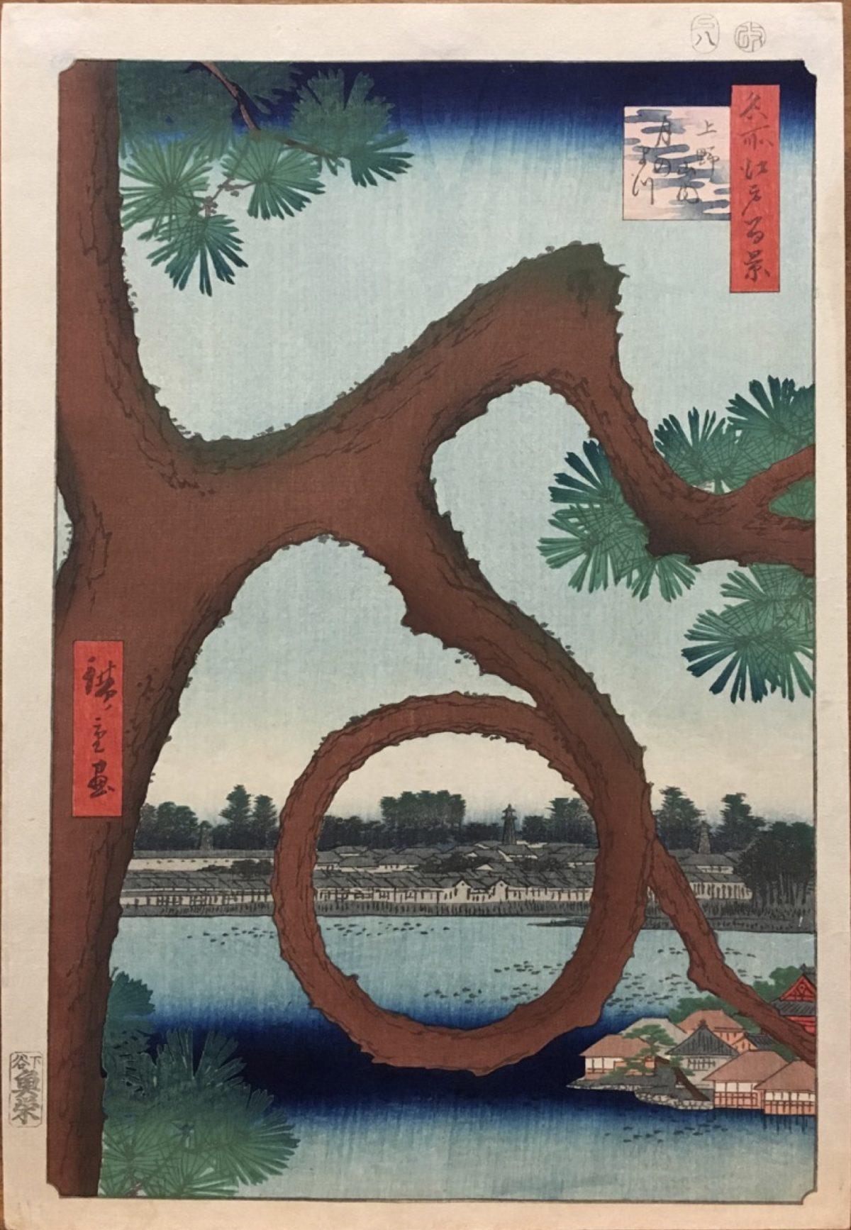 Pine tree mountain water in Japan