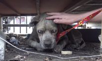 Blind Old Dog Found in Appalling Condition in Junkyard is Given New Lease on Life