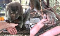 Lonely Macaque Grasps Rescuer's Hand, Neglected for 7 Years in a Tiny Cage