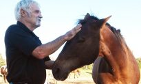 Vietnam Veteran With PTSD Finds Peace After Volunteering at Blind Horse Rescue