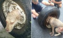 Stray Dog With Head Stuck in Tire Saved in a Dramatic Rescue by Firefighters