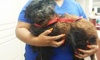 What Resembled a Garbage Bag Turned Out to be a Dog, Horribly Matted and Unrecognizable