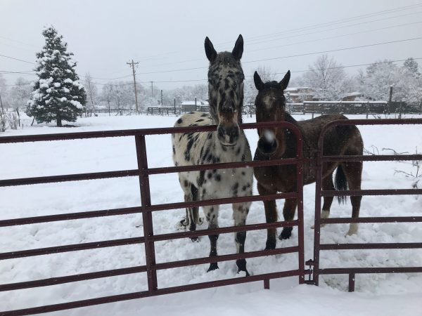Horses stand in snow
