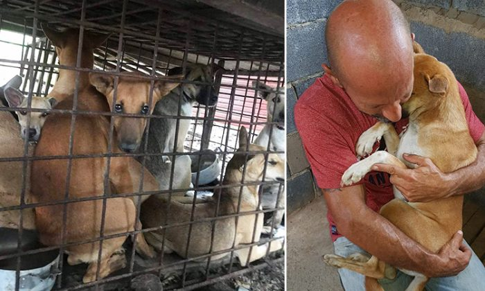 Pooch Refuses to Let Go of the Man Who Saved Her From a Dog Butcher