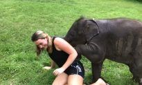 Tourist Gets More Than She Bargains For When Baby Elephant Demands Cuddles