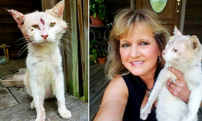 Woman Doesn't Recognize Badly Abused Animal Is a Cat Until She Gets Near