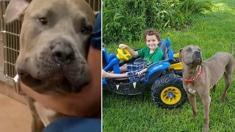 eb0d79ec7 » Dogs Bark Viciously to Alert Grandma of Copperhead Snake Just Inches From  Grandkids – The Epoch TimesThe Doggy Blogger