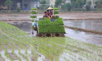China's Growth Slowed by Service, Farm Sectors