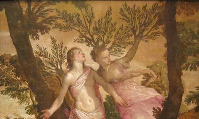 "At the moment Daphne sends a prayer, she is transformed. ""Apollo and Daphne,"" between circa 1560 and circa 1565, by Paolo Veronese. San Diego Museum of Art. (Public Domain)"