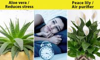12 Plants For Your Bedroom to Sleep Better and Treat Insomnia—The Scent From # 10 Can Replace Sleeping Pills