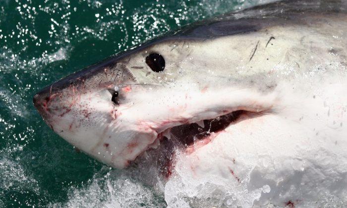 Photos: Shark Eggs Are a Bit Unusual