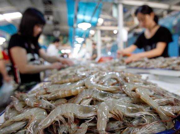 Shrimp in a wet market in Beijing, China.